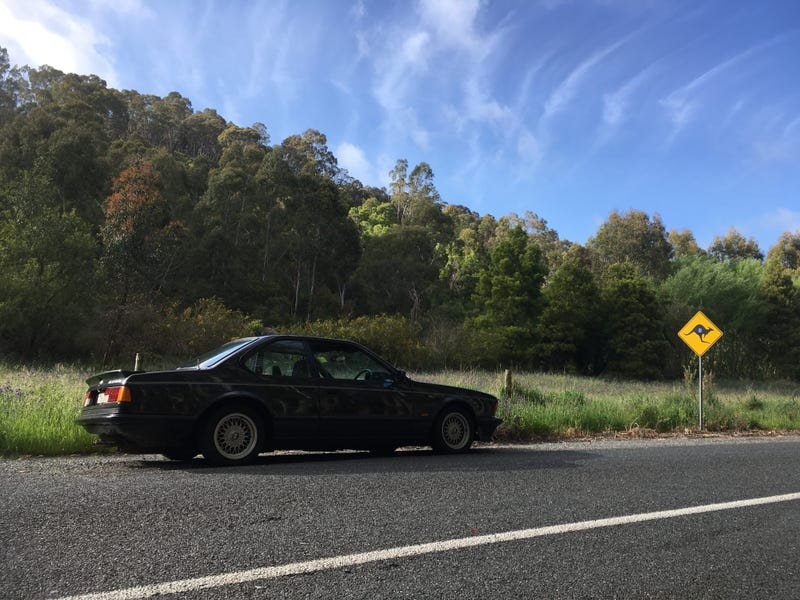 Illustration for article titled BMW 635CSi. Adelaide Hills. Springtime. Goodtime.
