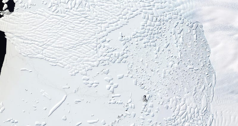 Aerial image of an ice cliff at the terminus of Thwaites Glacier, West Antarctica on 9 January 2016. Image: Knut Christianson