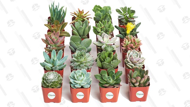 Stock Up On Some House Plants With This Gold Box