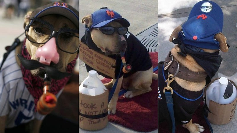 Illustration for article titled This Poor Dog Is Forced To Sit Outside Mets Games With A Pipe In Its Mouth