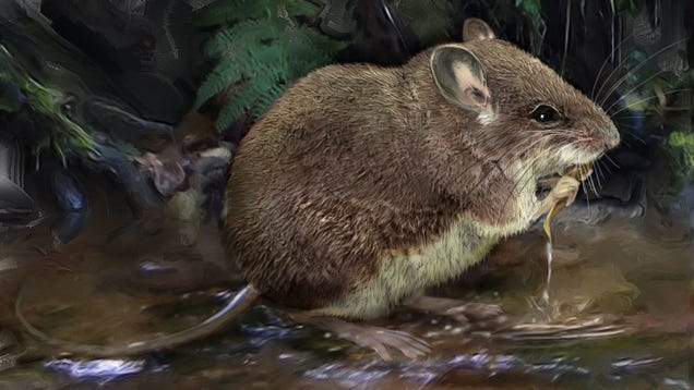 These Semi-Aquatic Mice Are as Fascinating as They Are Adorable