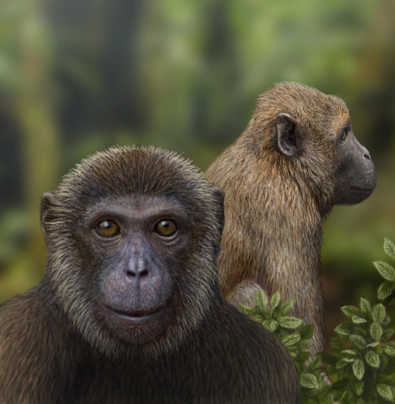 Illustration for article titled Fossils reveal the evolutionary split between monkeys and apes