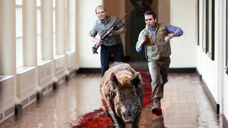 Illustration for article titled Trump Boys Chasing Wounded Boar Around White House