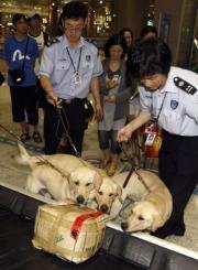 Illustration for article titled Korean Dog Clones Start Sniffing Drugs, Underwear