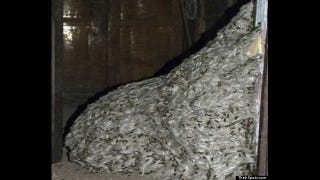 Illustration for article titled This horrific 22-foot wasp nest was found inside an abandoned house
