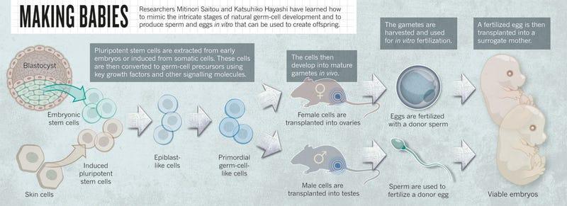 How Is Sperm Produced? LIVESTRONGCOM