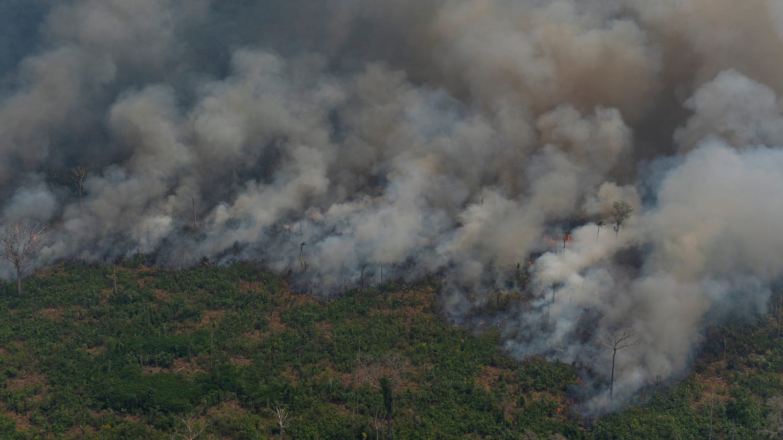 What Caused the Amazon Rain Forest Fires?