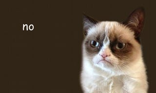 Illustration for article titled Grumpy Cat Needs No Saving