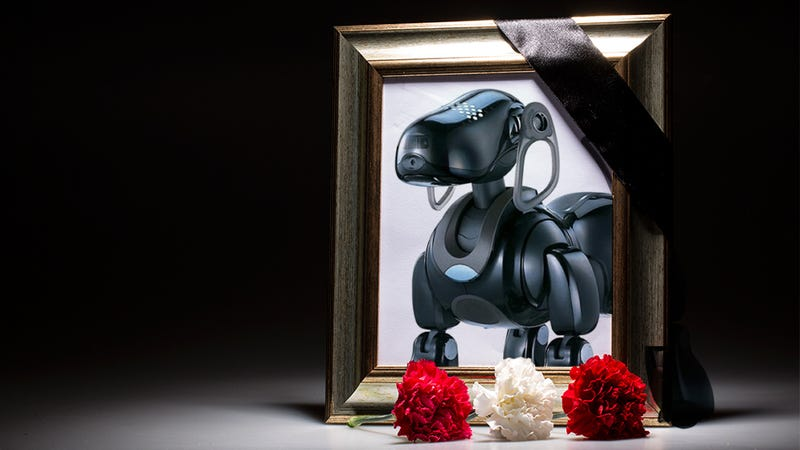 Illustration for article titled Japan Is Holding Actual Funerals For Sony's Robotic AIBO Dogs