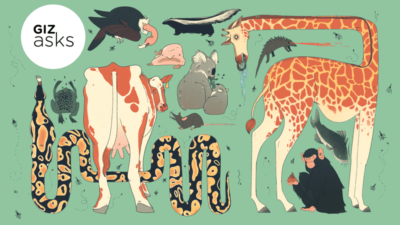 Illustration for article titled What's the Filthiest Animal?