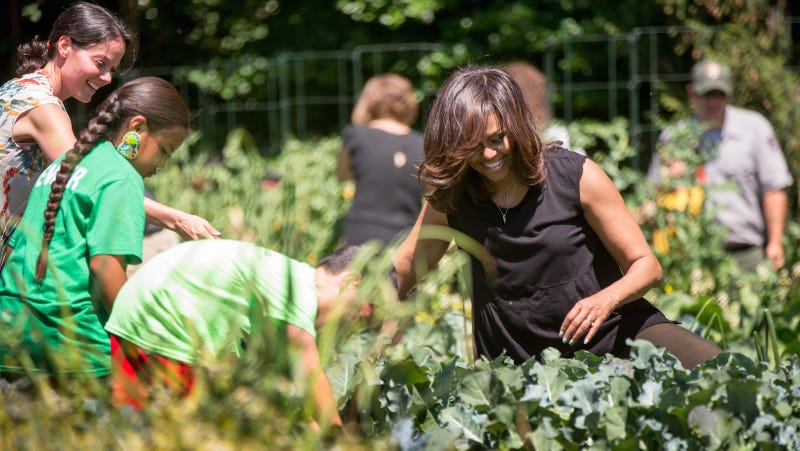 Michelle Obama and school children from around the country harvest the White House Kitchen Garden in June 2016. Image via Andrew Harnik/AP Photo.