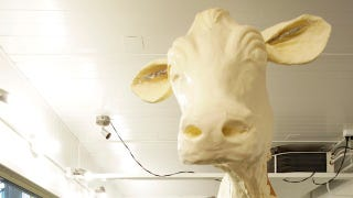 Illustration for article titled When You Drag The Butter Cow Into It, You've Crossed A Line