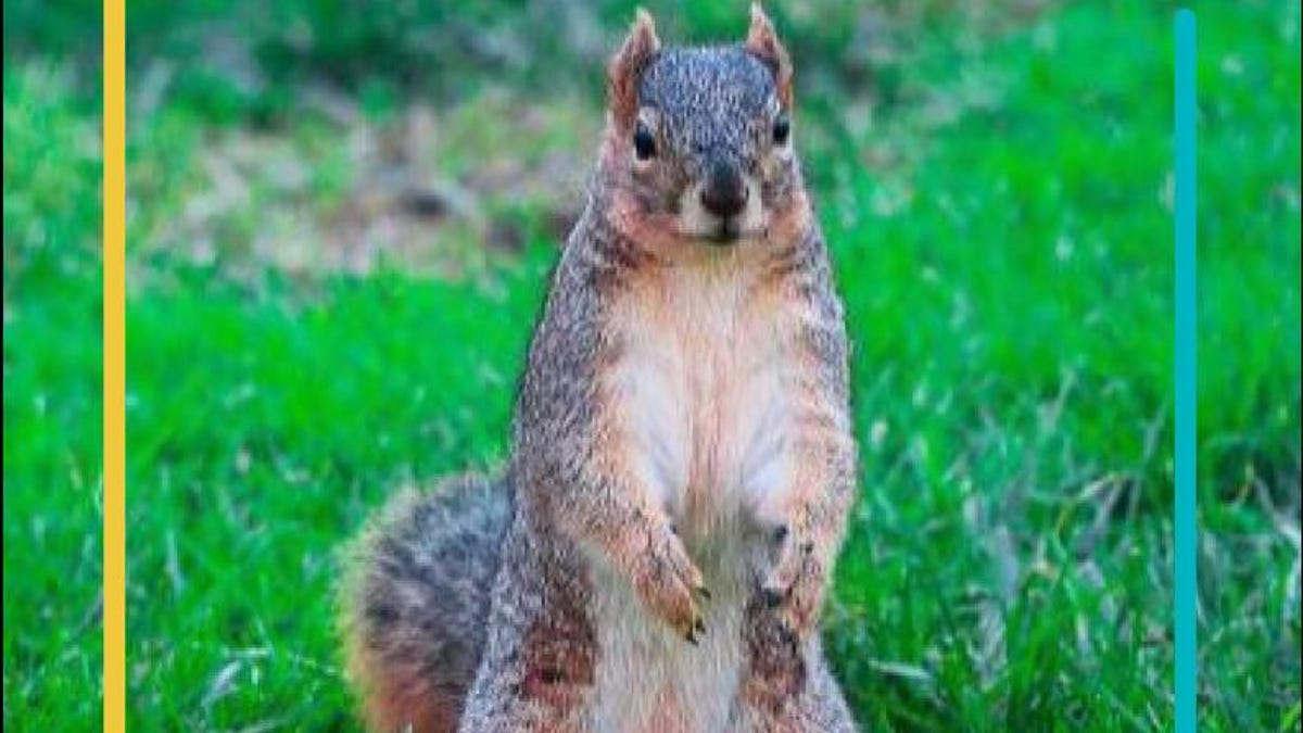 Meet Furry Boi, the Squirrel Who Won a UC Berkeley Senate Seat