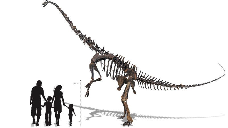 Illustration for article titled Este esqueleto gigante de Diplodocus puede ser tuyo, solo te hacen falta un par de millones de dólares
