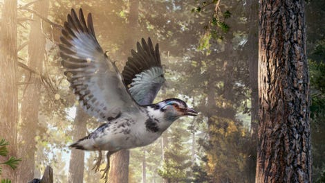 Spooky Shrieking Bird Looks and Sounds Like Something Out of a