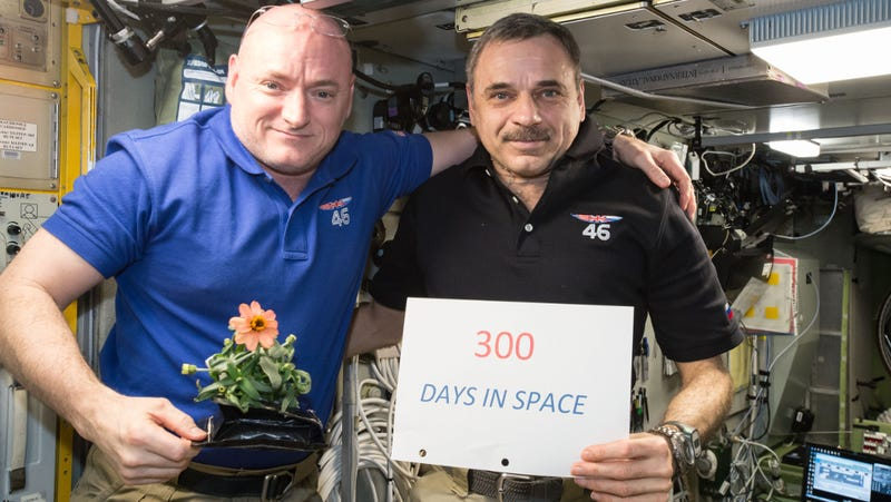 Scott Kelly of NASA (left) and Mikhail Kornienko of Roscosmos (right) celebrate their 300th consecutive day in space on January 21, 2016. They wouldn't come back down to Earth for another 40 days. (Image: NASA)