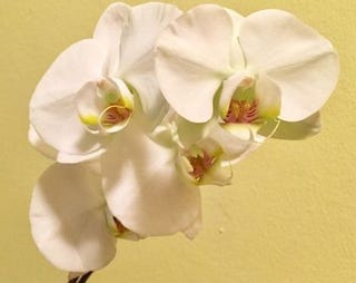 My new blooms. Photo by Olga Oksman