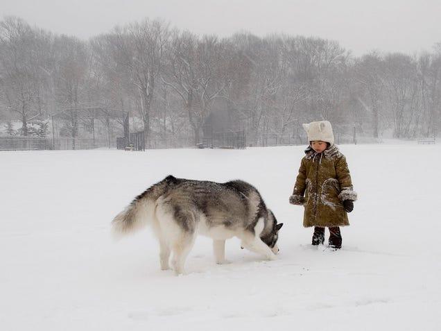 Public Dogs