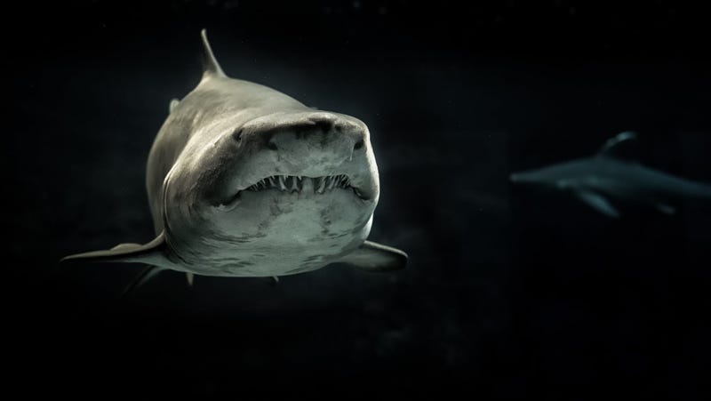 Image Pexels Its Shark Week