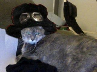 Illustration for article titled AMA: I am a cat pickup artist