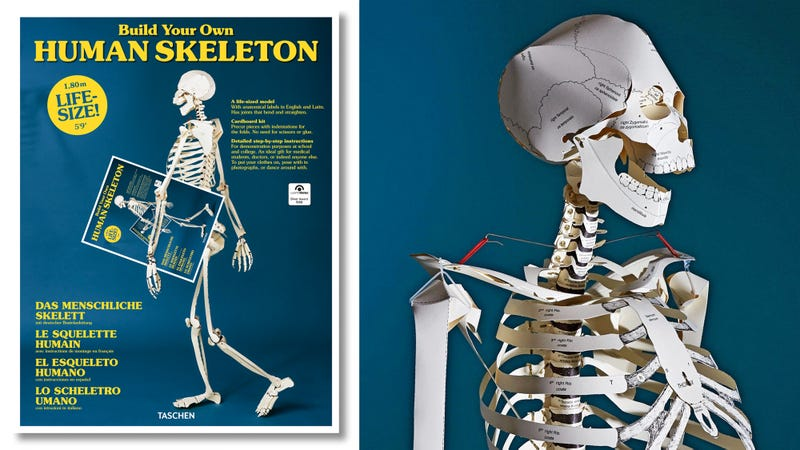 a textbook that turns into a lifesize paper skeleton should be