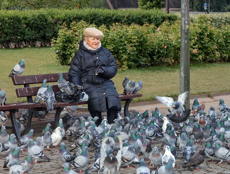 Illustration for article titled Elderly Woman Spends Day In Park Feeding Pigeons Dismembered Husband