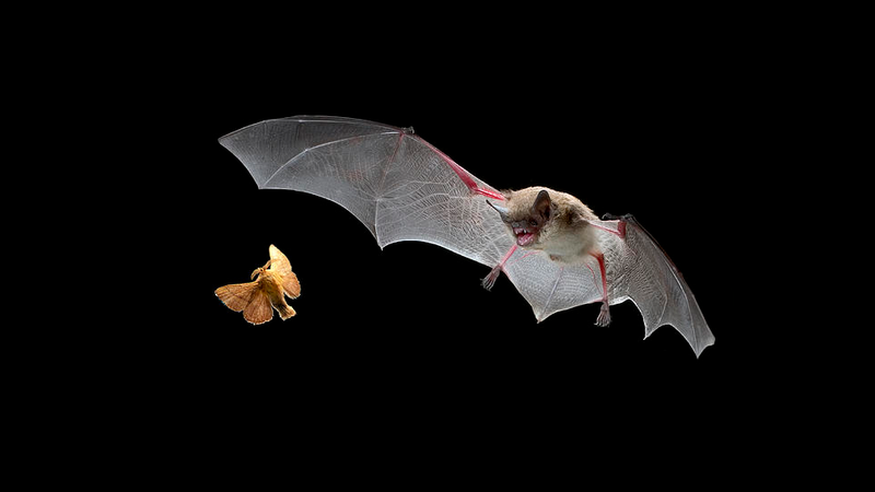 Illustration for article titled New echo-detecting app could allow humans to 'see' like bats