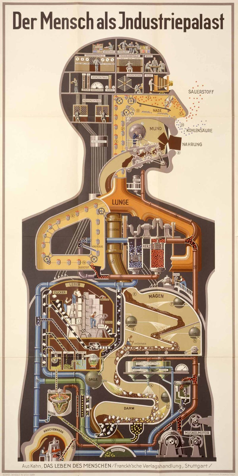Illustration for article titled Fritz Kahn's Cybernetic Body Art Is Like Terminator Circa 1920