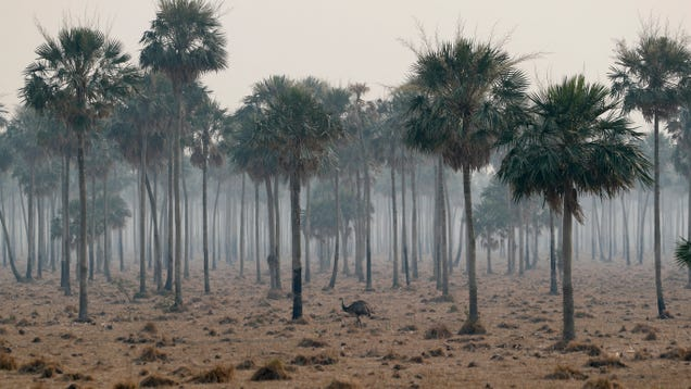 Soil May Not Be Able to Keep Storing Carbon Dioxide as Emissions Increase