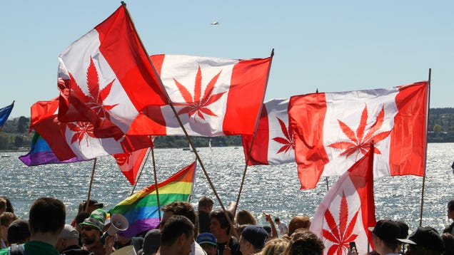 How to Buy Weed in Canada Now That It s Legal