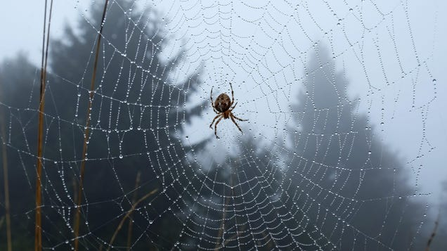 MIT Researchers Want to Talk to Spiders