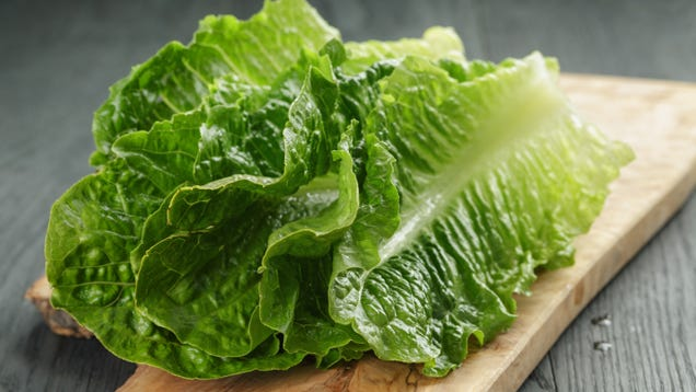 It s Time for the Annual Romaine Recall