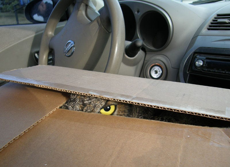 Illustration for article titled Box Owl Is Watching Your Nissan