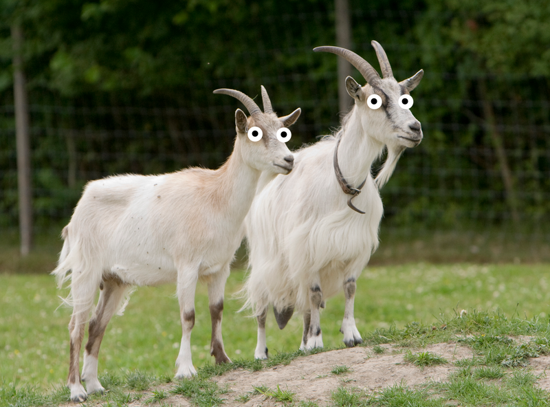 Illustration for article titled New UK high-speed rail to require 6,000 sacrificial goats