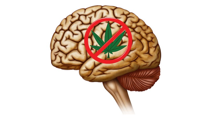 Illustration for article titled Scientists Find a Marijuana-Blocking Compound Made by Your Brain