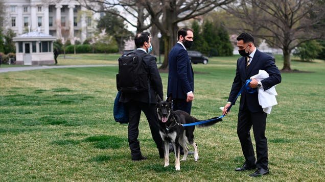 Secret Service Says It Has No Plan for Protecting White House Pets During an Attack