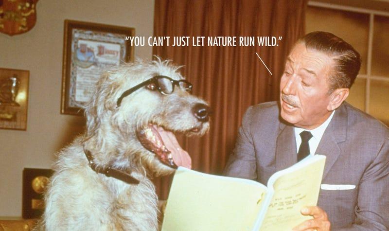 Citas atribuidas a Walt Disney que él en realidad nunca dijo
