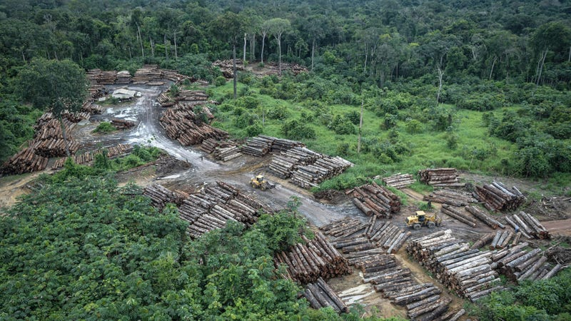 Deforestation was a problem even in 2018. Things aren't looking better now.