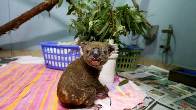 New Report Reveals the Shocking Toll Bushfires Took on Australia's Wildlife