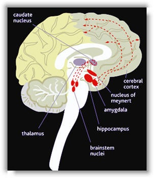 Science Help! How does cannabis work in the body and brain to produce its effects?