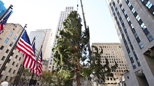 Cancel the Rockefeller Center Christmas Tree for Good