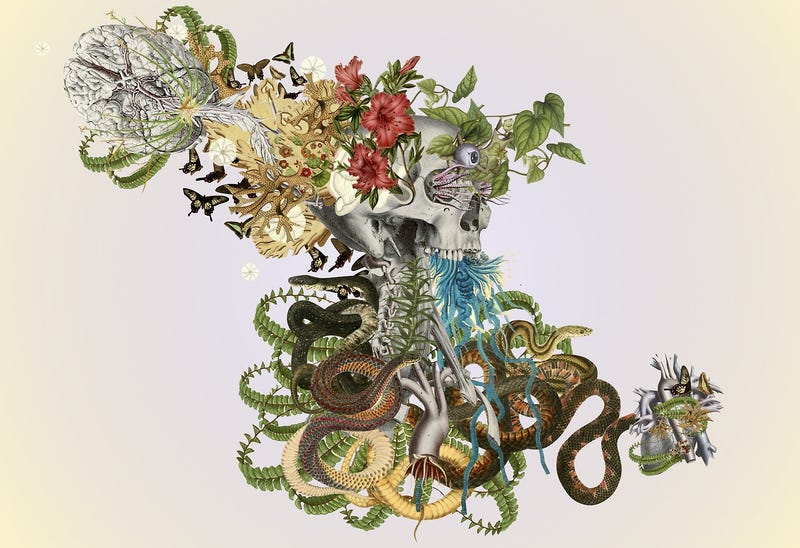 Illustration for article titled Surreal Collages of Animals, Plants, and Body Parts Are Subtly Creepy