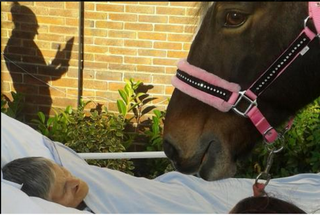 Illustration for article titled Cancer Patient Granted Last Wish to See Her Horse Shortly Before Dying