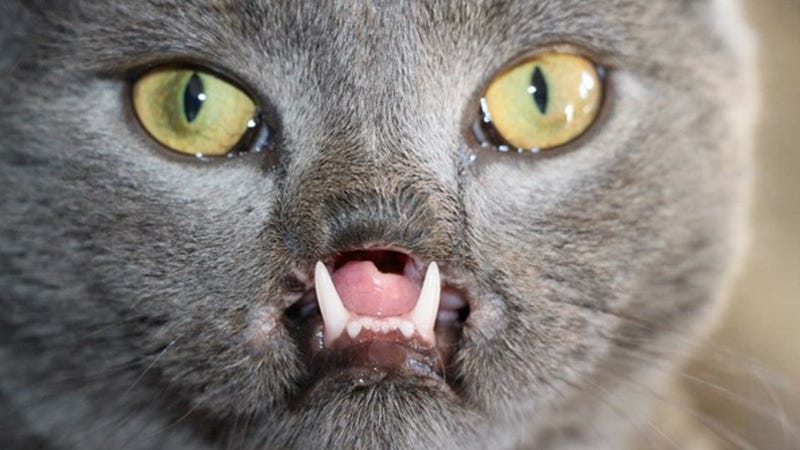 Watch Your Back, Bunnicula: It's Lazarus, the Vampire Cat
