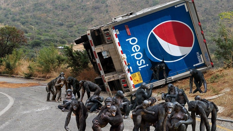 Illustration for article titled Major Disaster: Over 6,000 Chimpanzees Have Escaped From An Overturned Pepsi Truck That Crashed On The Highway