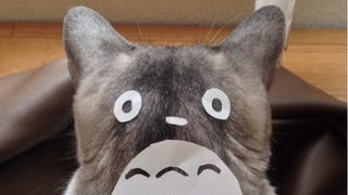 Illustration for article titled An Easy Way To Turn Your Cat into Totoro