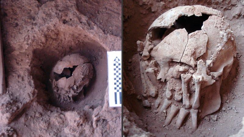 Illustration for article titled Descubren los restos más antiguos de una decapitación ritual en América