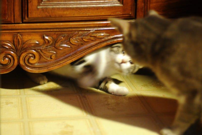 Illustration for article titled Feline Diplomacy: Vol. I