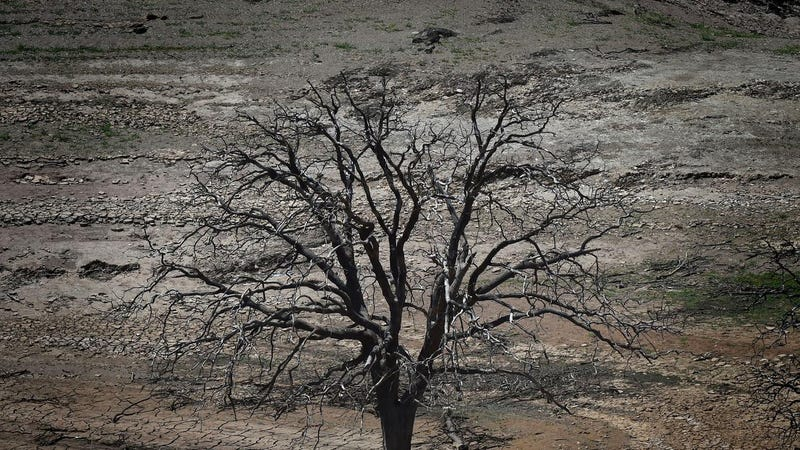 Over the past year surveys show there were a total of 27 million dead trees in California. It come after years of drought. Photo:  Getty Images