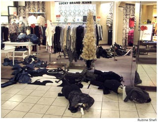 Illustration for article titled Teen Riot Closes Wisconsin Mall